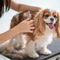 Westie & Co. Terrier-Trimming Hundepflege