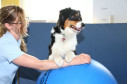 https://www.yelp.com/biz/zentrum-f%C3%BCr-ergotherapie-logop%C3%A4die-physiotherapie-stuttgart
